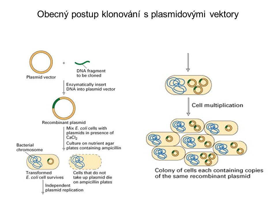 Obecný postup klonování s plasmidovými vektory