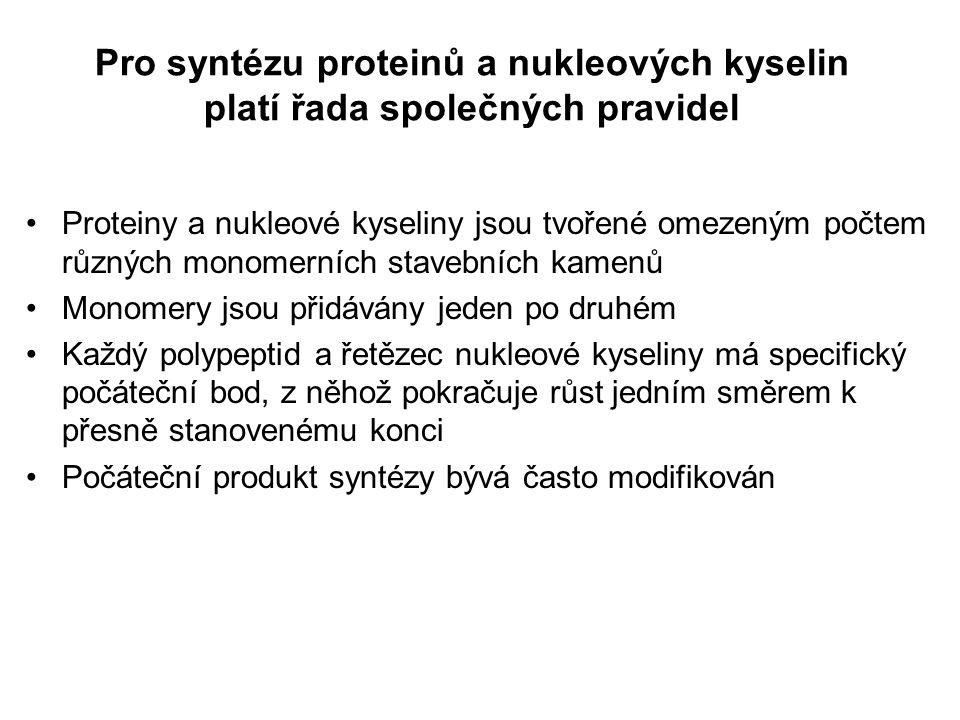 Pro syntézu proteinů a nukleových kyselin platí řada společných pravidel