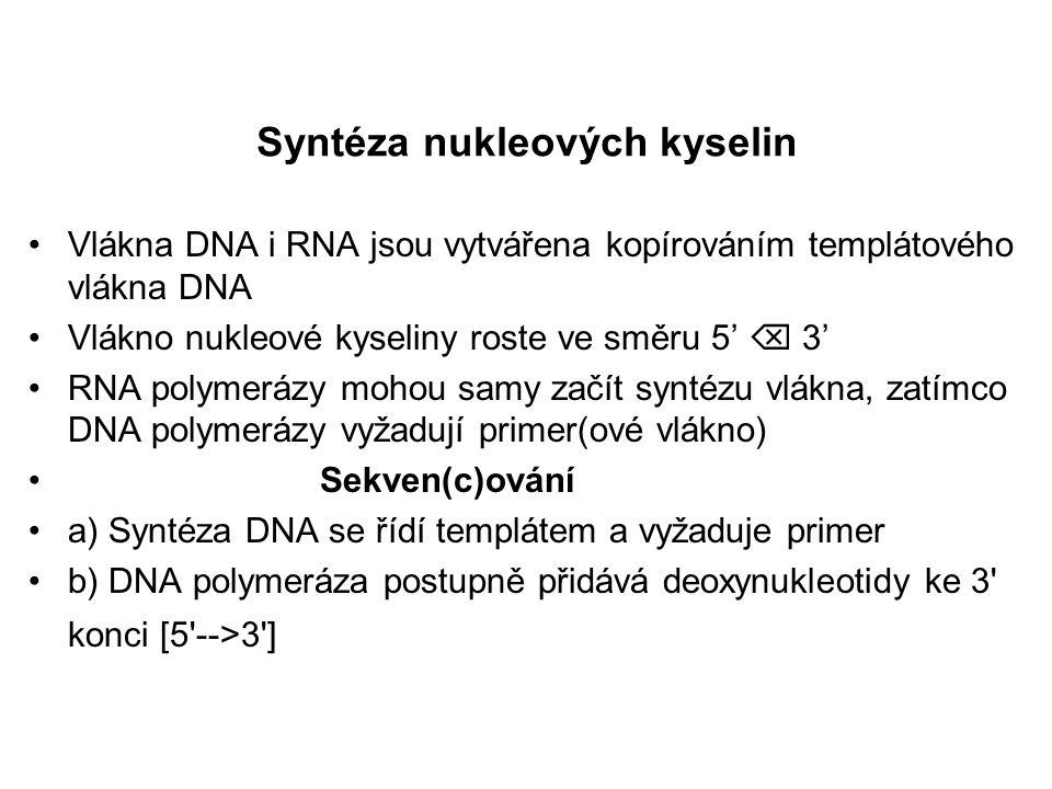Syntéza nukleových kyselin