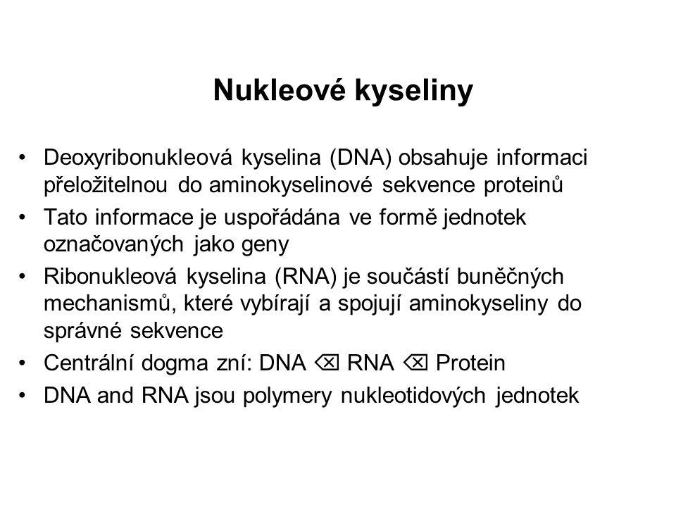 Nukleové kyseliny Deoxyribonukleová kyselina (DNA) obsahuje informaci přeložitelnou do aminokyselinové sekvence proteinů.