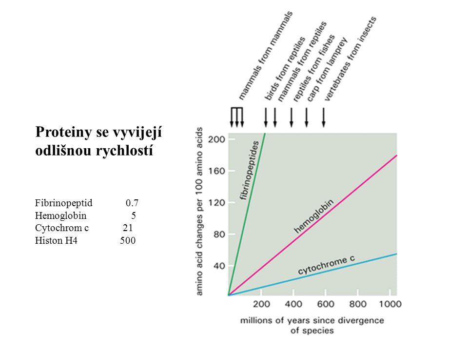 Proteiny se vyvijejí odlišnou rychlostí Fibrinopeptid 0.7 Hemoglobin 5