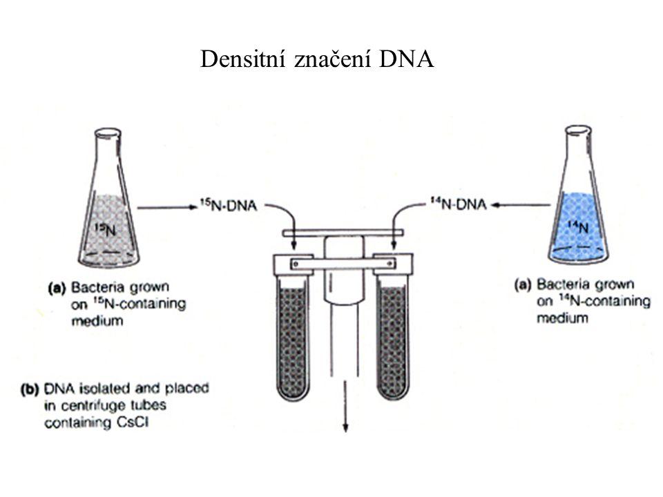 Densitní značení DNA