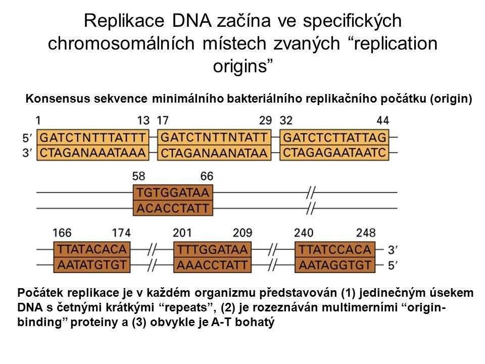 Replikace DNA začína ve specifických chromosomálních místech zvaných replication origins