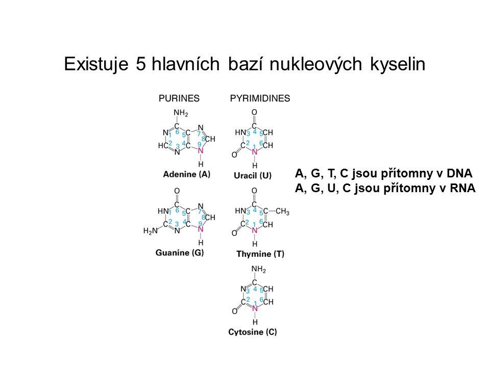 Existuje 5 hlavních bazí nukleových kyselin