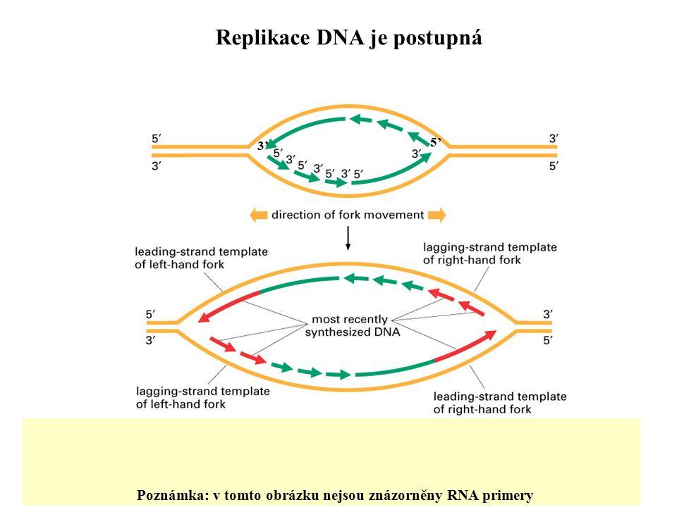 Replikace DNA je postupná