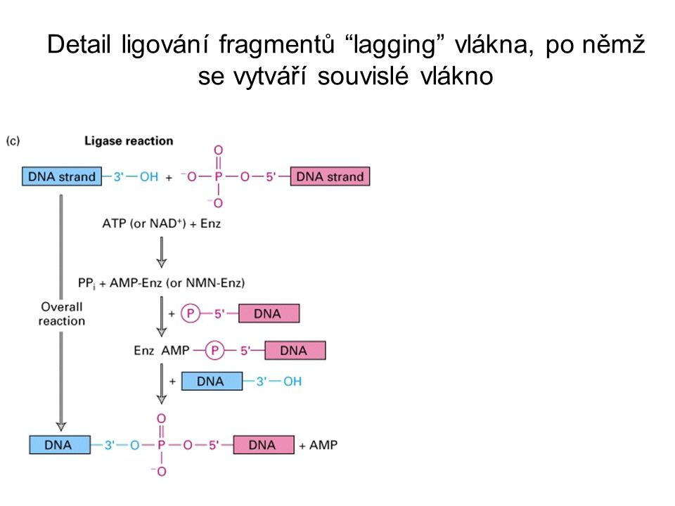 Detail ligování fragmentů lagging vlákna, po němž se vytváří souvislé vlákno