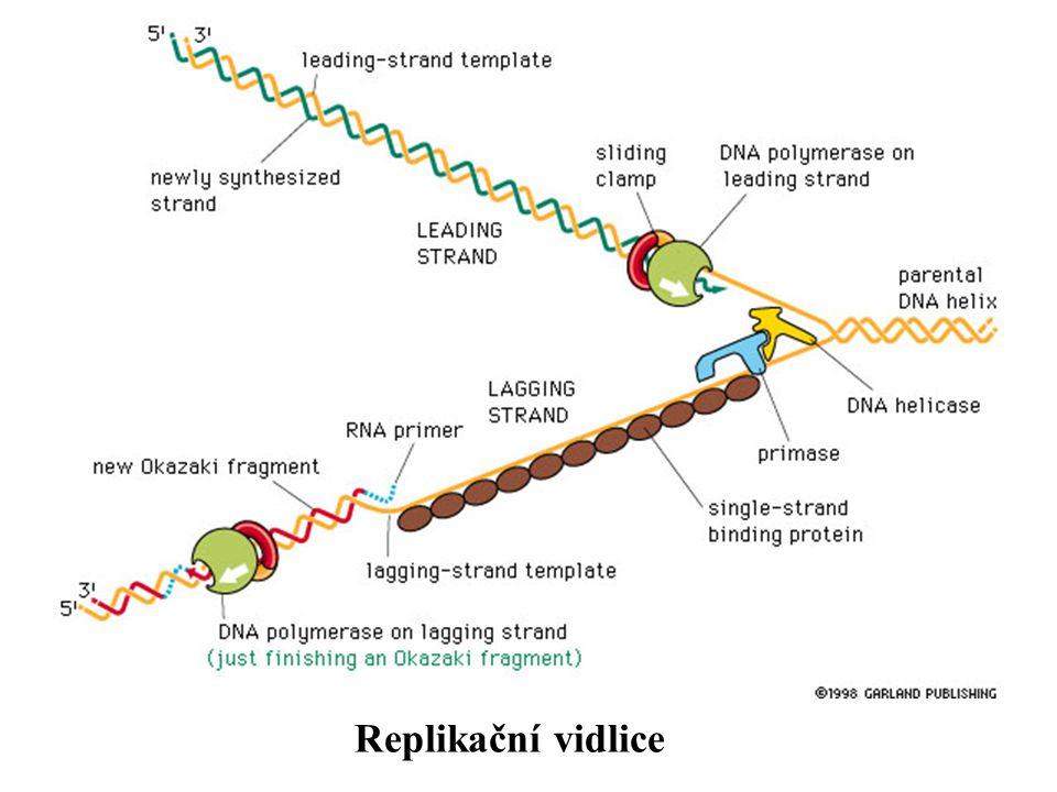 Replikační vidlice