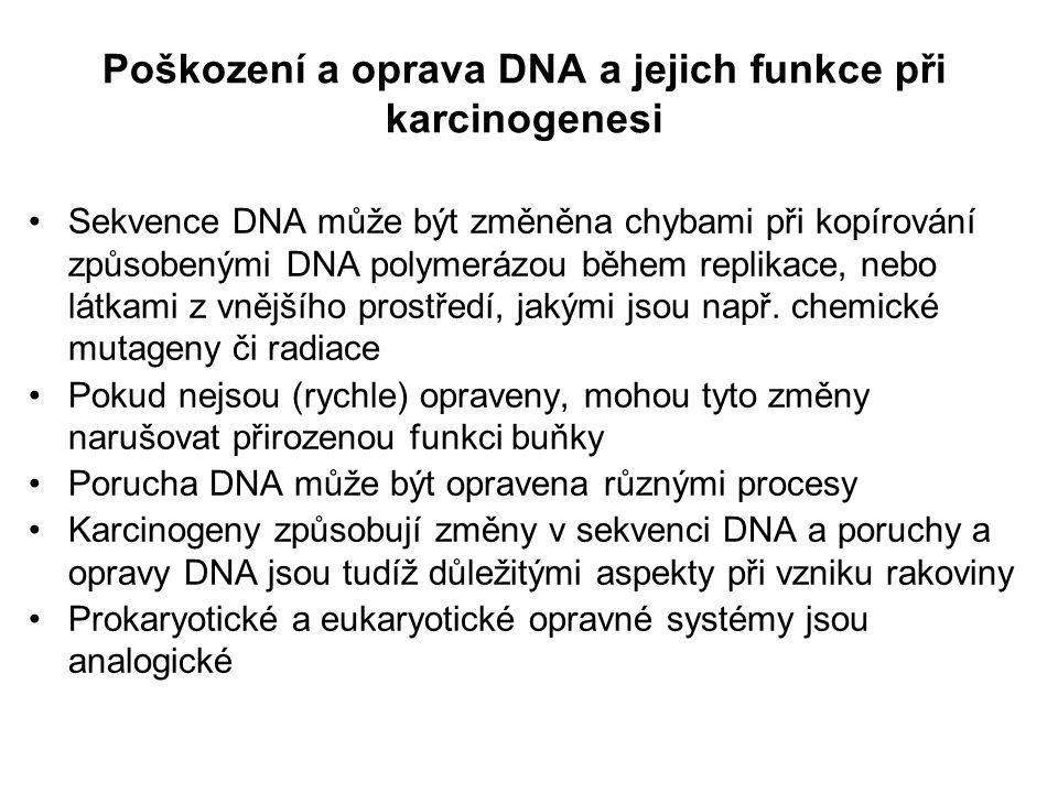 Poškození a oprava DNA a jejich funkce při karcinogenesi