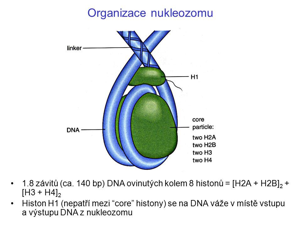 Organizace nukleozomu