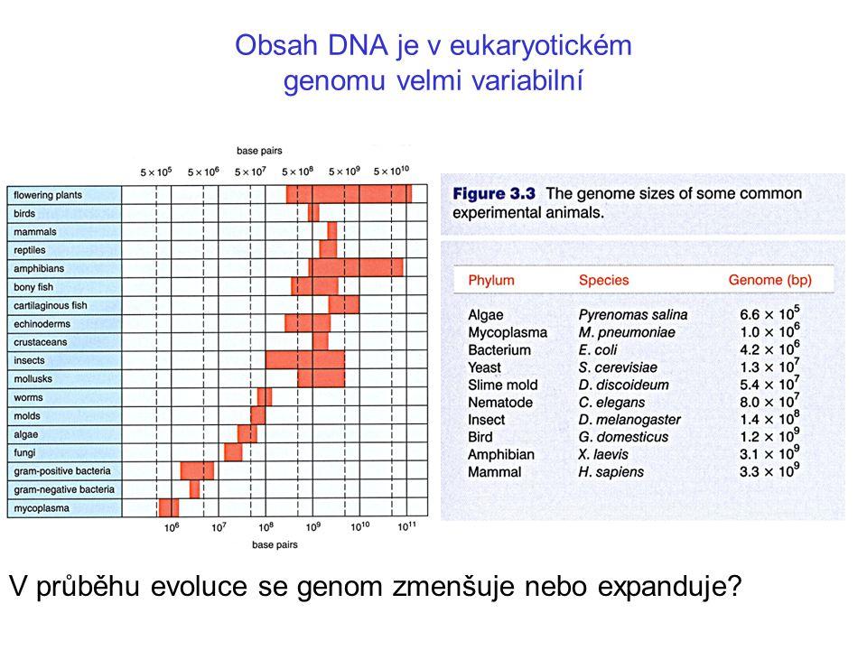 Obsah DNA je v eukaryotickém genomu velmi variabilní