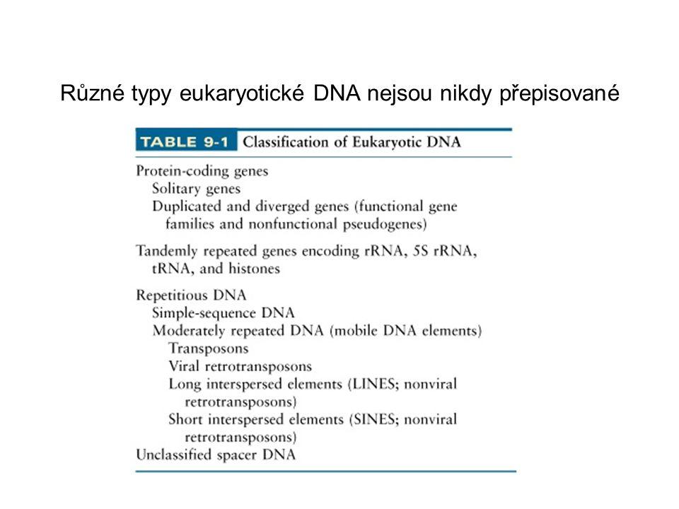 Různé typy eukaryotické DNA nejsou nikdy přepisované