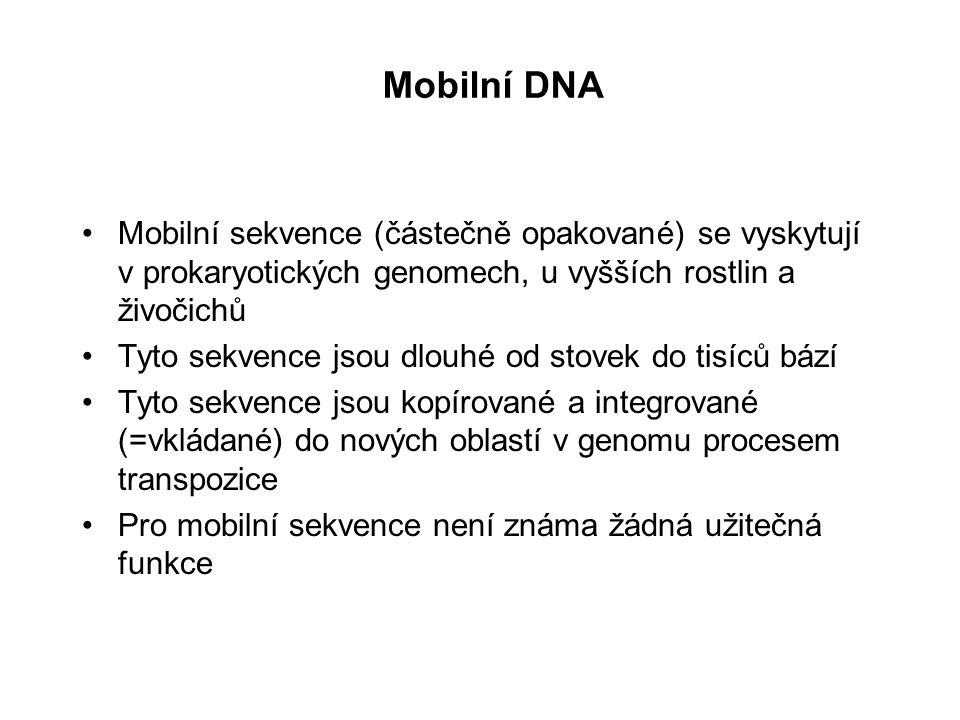Mobilní DNA Mobilní sekvence (částečně opakované) se vyskytují v prokaryotických genomech, u vyšších rostlin a živočichů.