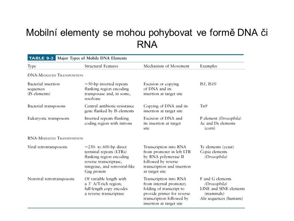 Mobilní elementy se mohou pohybovat ve formě DNA či RNA