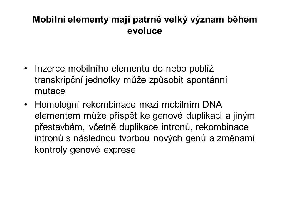Mobilní elementy mají patrně velký význam během evoluce