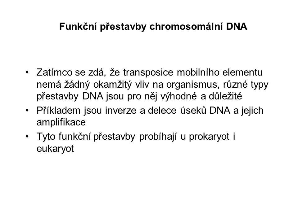 Funkční přestavby chromosomální DNA