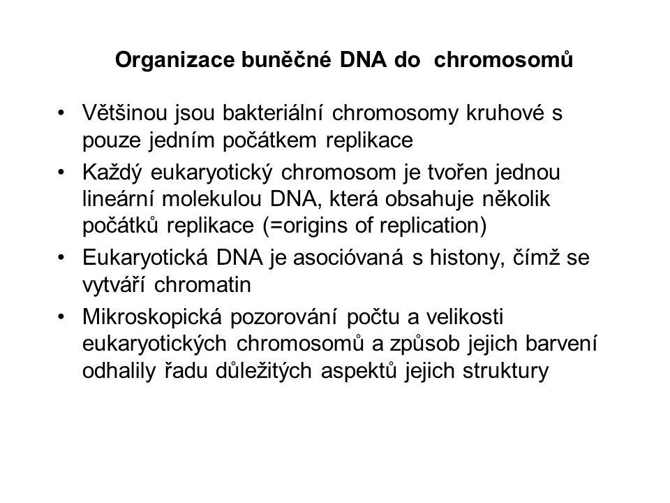 Organizace buněčné DNA do chromosomů