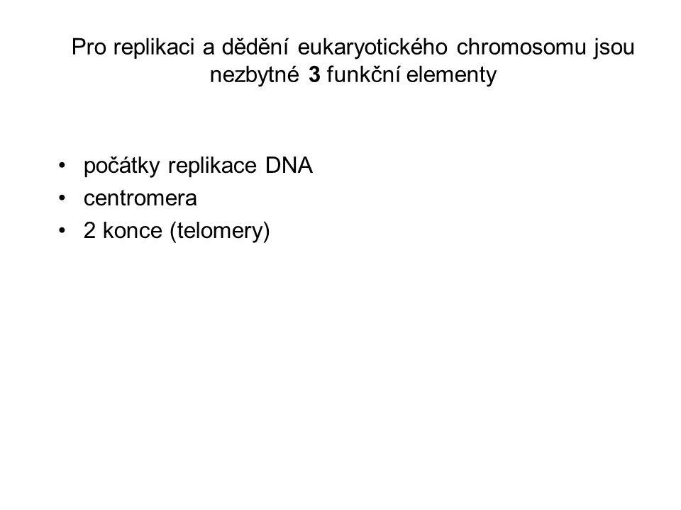 Pro replikaci a dědění eukaryotického chromosomu jsou nezbytné 3 funkční elementy