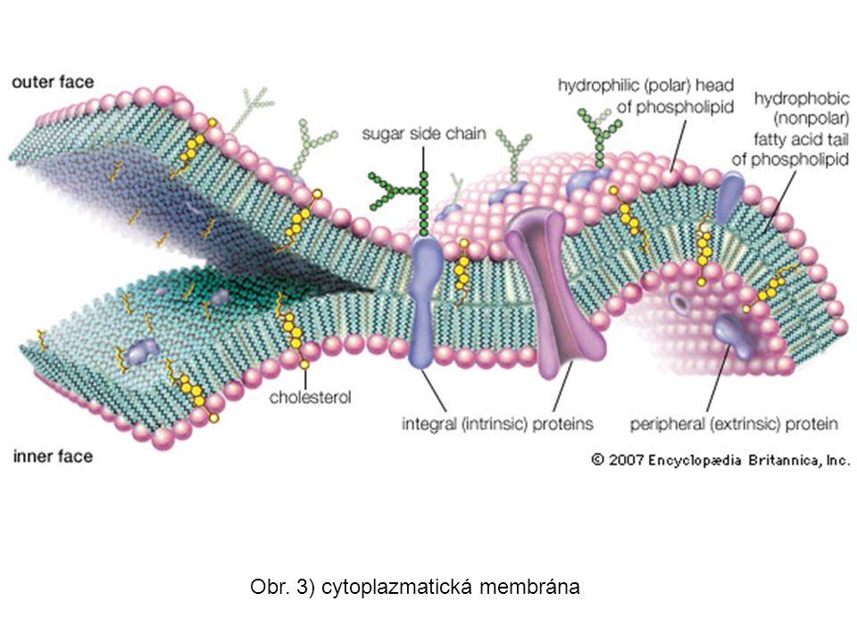 Obr. 3) cytoplazmatická membrána