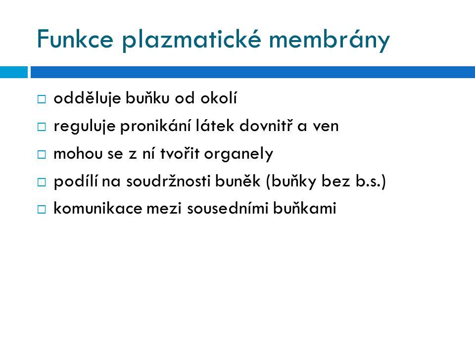 Funkce plazmatické membrány