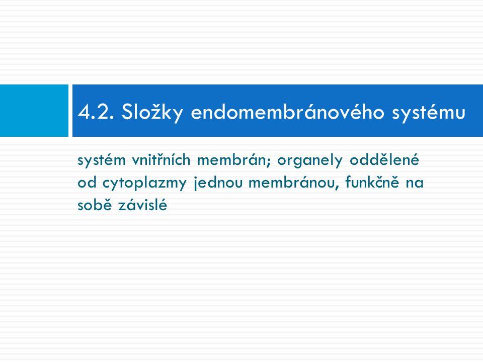 4.2. Složky endomembránového systému