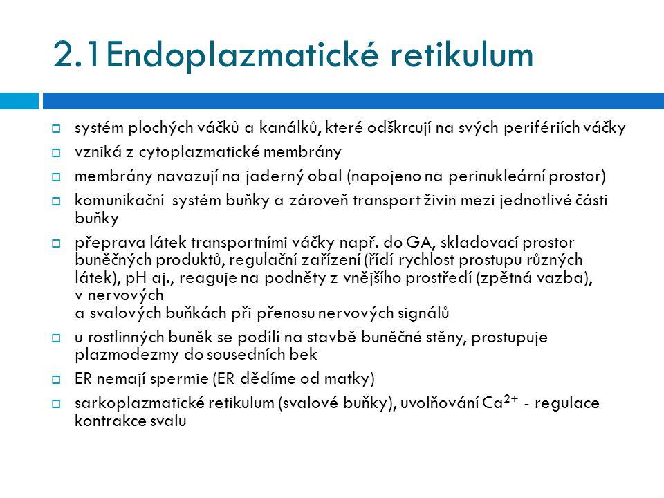 2.1Endoplazmatické retikulum