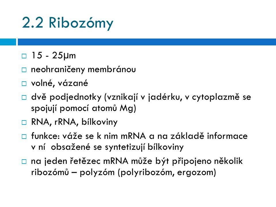 2.2 Ribozómy 15 - 25µm neohraničeny membránou volné, vázané