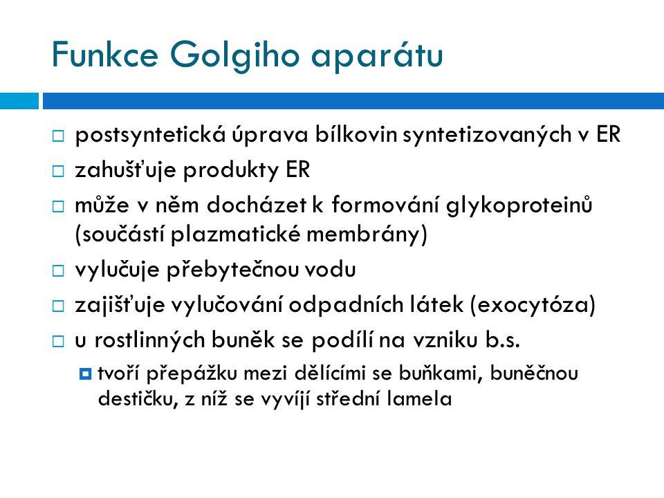 Funkce Golgiho aparátu