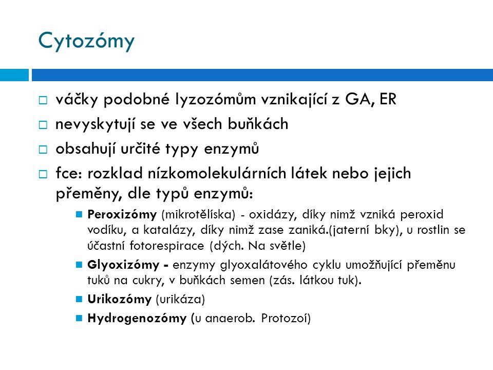 Cytozómy váčky podobné lyzozómům vznikající z GA, ER