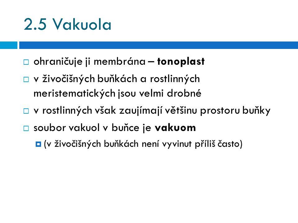 2.5 Vakuola ohraničuje ji membrána – tonoplast