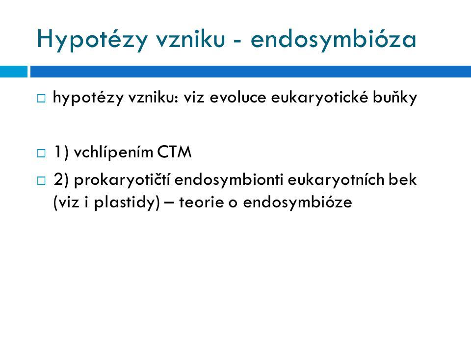 Hypotézy vzniku - endosymbióza