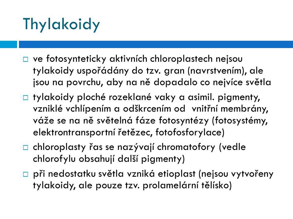 Thylakoidy