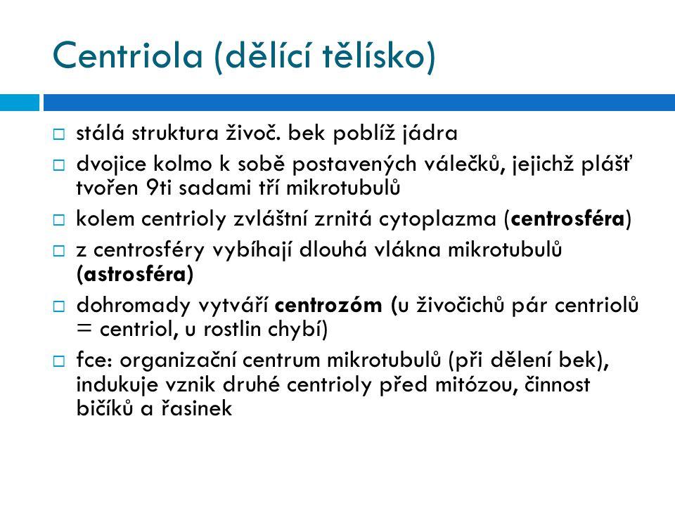 Centriola (dělící tělísko)
