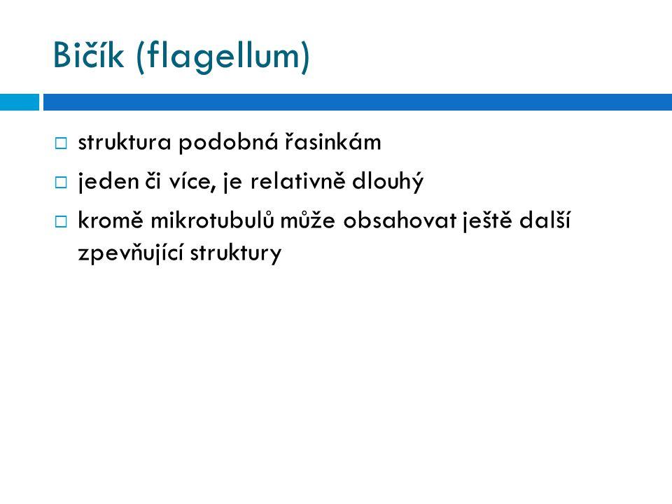 Bičík (flagellum) struktura podobná řasinkám