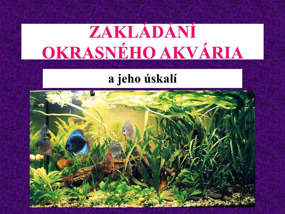 ZAKLÁDÁNÍ OKRASNÉHO AKVÁRIA