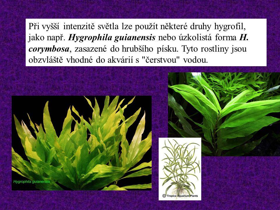 Při vyšší intenzitě světla lze použít některé druhy hygrofil, jako např.