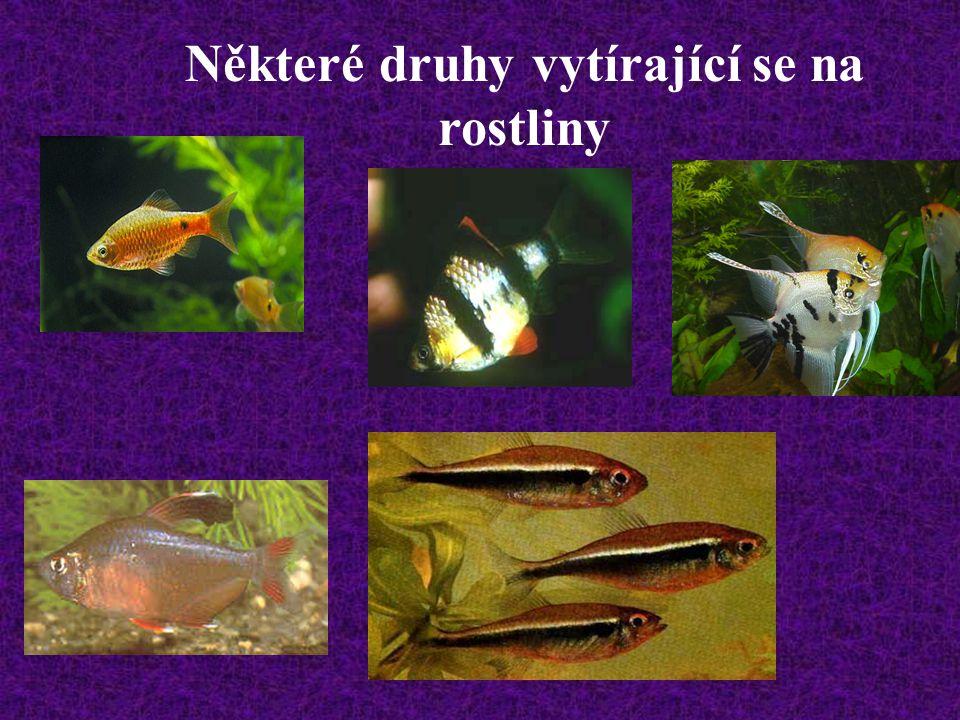 Některé druhy vytírající se na rostliny