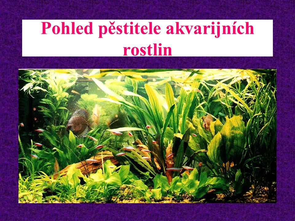 Pohled pěstitele akvarijních rostlin