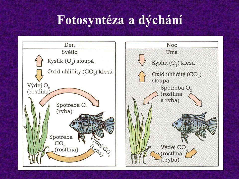 Fotosyntéza a dýchání
