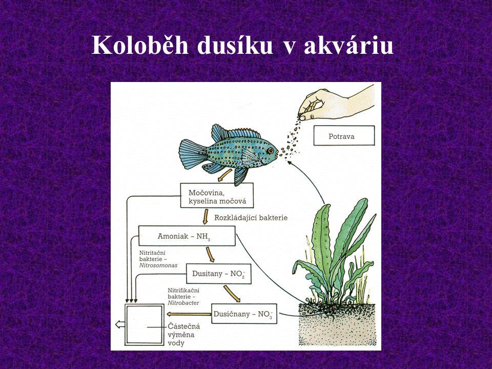 Koloběh dusíku v akváriu
