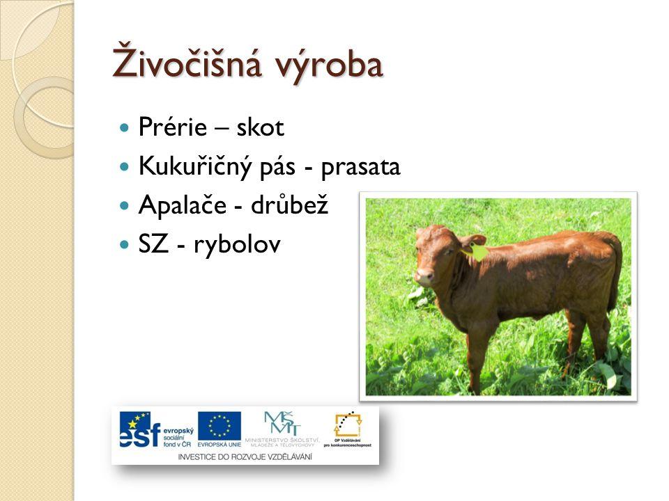 Živočišná výroba Prérie – skot Kukuřičný pás - prasata