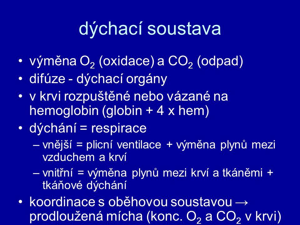 dýchací soustava výměna O2 (oxidace) a CO2 (odpad)