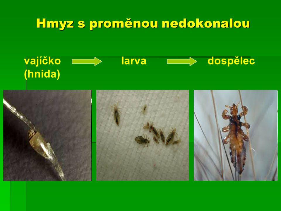 Hmyz s proměnou nedokonalou