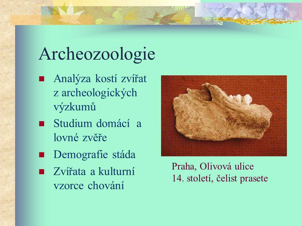 Archeozoologie Analýza kostí zvířat z archeologických výzkumů