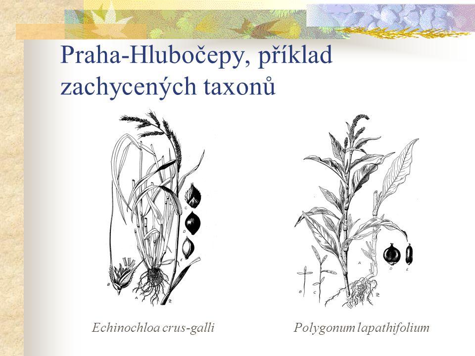 Praha-Hlubočepy, příklad zachycených taxonů