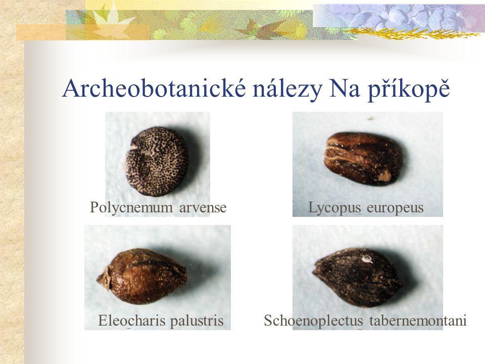 Archeobotanické nálezy Na příkopě