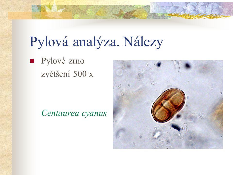 Pylová analýza. Nálezy Pylové zrno zvětšení 500 x Centaurea cyanus