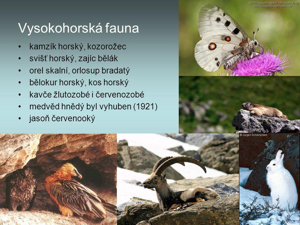 Vysokohorská fauna kamzík horský, kozorožec svišť horský, zajíc bělák