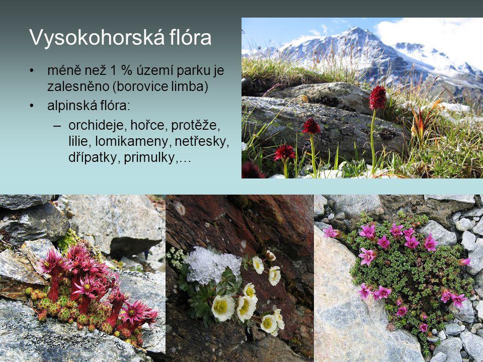 Vysokohorská flóra méně než 1 % území parku je zalesněno (borovice limba) alpinská flóra: