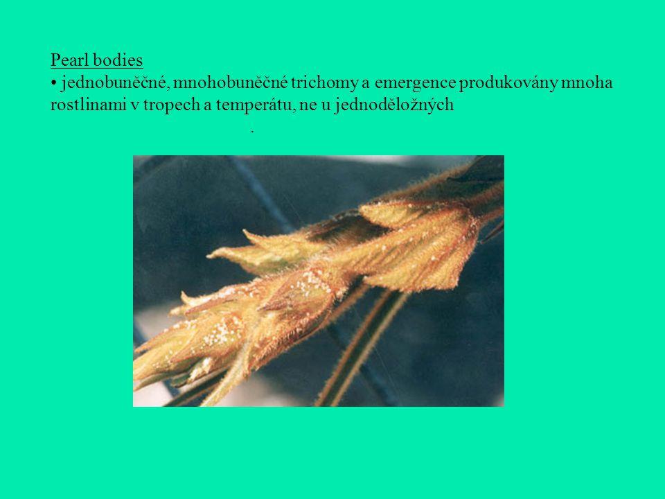 Pearl bodies jednobuněčné, mnohobuněčné trichomy a emergence produkovány mnoha rostlinami v tropech a temperátu, ne u jednoděložných.
