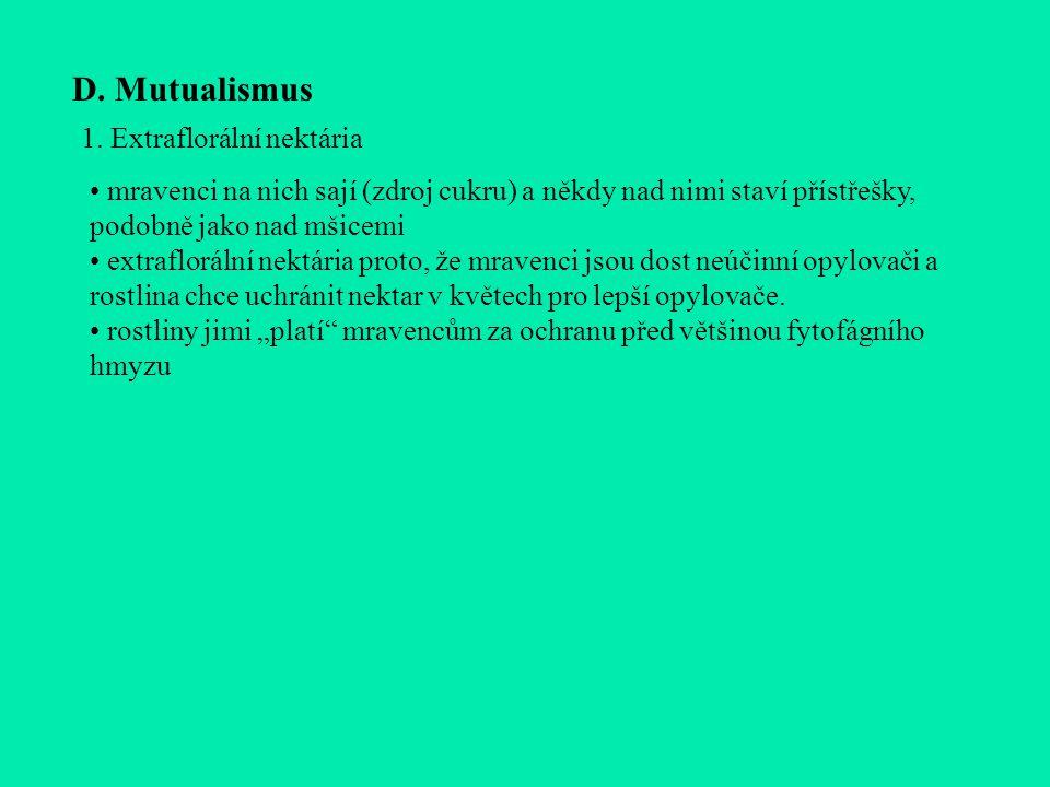 D. Mutualismus 1. Extraflorální nektária